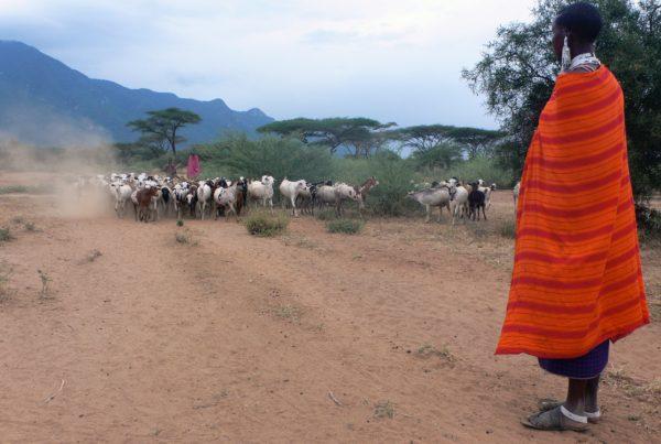 market analysis in tanzania