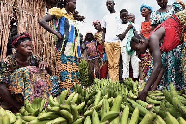 sb agroin filiere agro industraili imprese sociali social business ago industrial supply chain